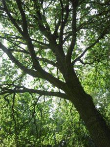 *GEANNULEERD* Verbinden, verdiepen, beleven met bomen jaarpad @ Kruid of zo
